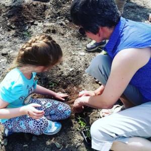 CLCS Sunflower Garden 2016 Planting