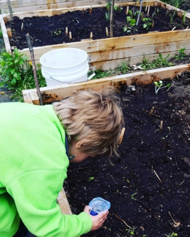 CLCS Raised Bed Gardens watering 2016