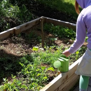 CLCS Raised Bed Gardens watering kale 2016