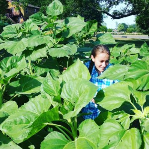 CLCS Sunflower Garden 2016, student gardener
