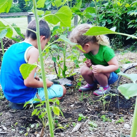 CLCS Sunflower Garden weeding 2016