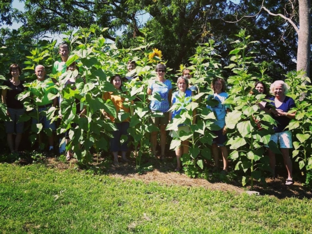 CLCS Sunflower Garden 2016 staff picture