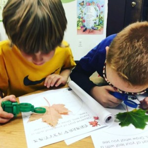 Hybrid-Homeschool students joined Mrs. Becker's first and second grade classroom today and studied leaves. They made leaf observations, floated them in water, and measured them. www.clcschool.org #science #leaves #hybridhomeschool #firstgrade #secondgrade
