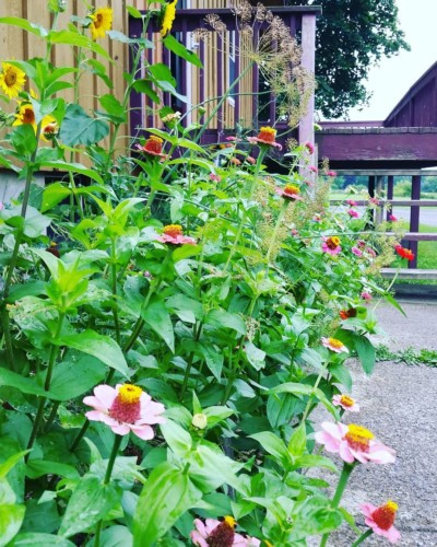 CLCS Primary B Pollinator Gardens 2016