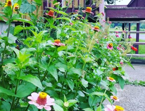 CLCS Primary B Pollinator Garden. Welcome, Bees & Butterflies!