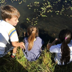 CLCS Environmental Education first & second grade 2016 pond