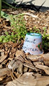 CLCS school garden herbs